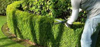 potature-e-taglio-piante-1